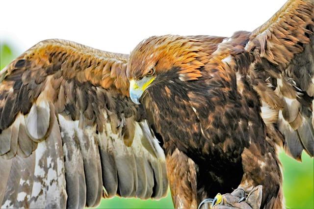 Most Dangerous Bird Species Around The Globe
